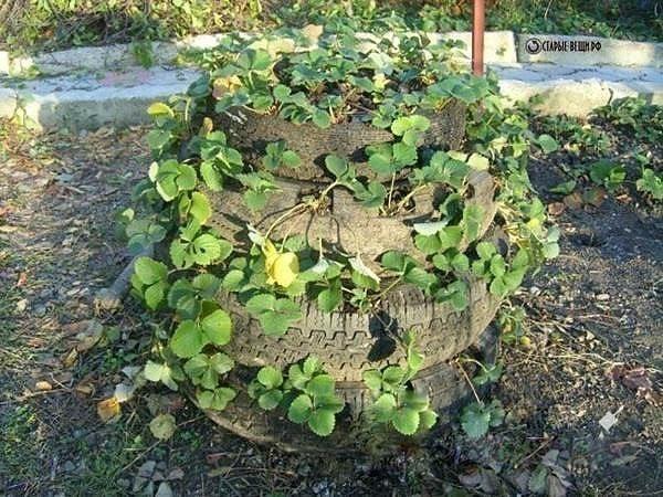 Выращивание клубники в шинах вертикально 60