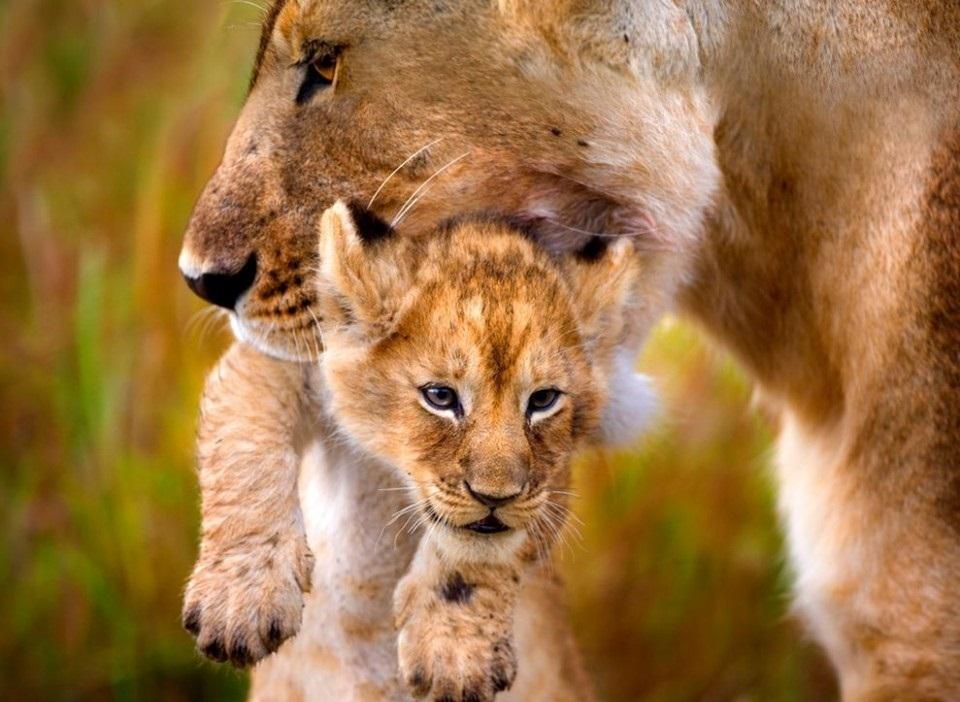 картинки с мамами и детенышами животных самых ранних картинах