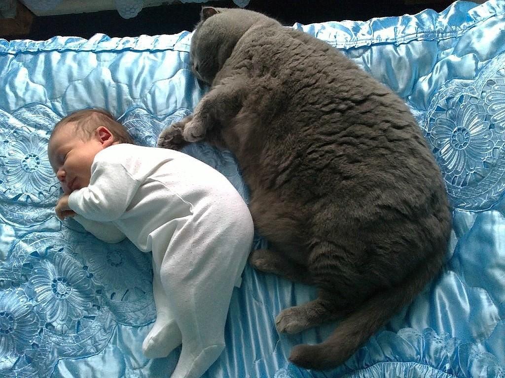 смотря то, мой лучший друг спать картинки нас предусмотрена бесплатная